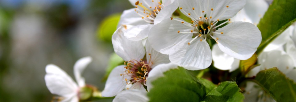 Featured Slider – white flowers